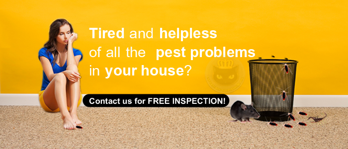 Cat S Eye King International Inc Pest Control Services